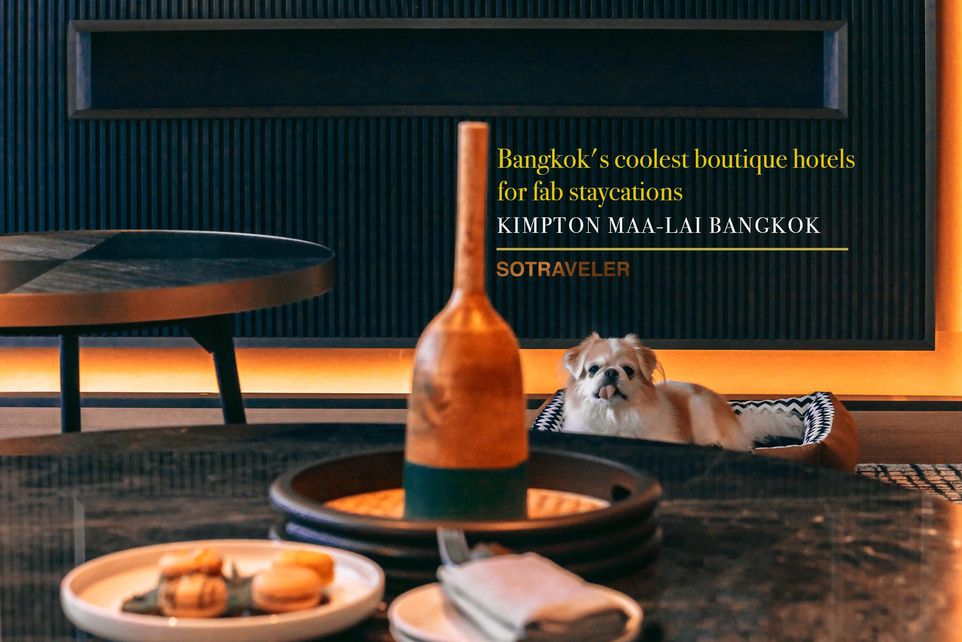 Kimpton Maa Lai Bangkok Hotel Review Pet Friendly Hotel